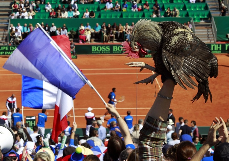 Who DOESN'T bring their bird to the tennis match? A supporter of the French team holds up a cockerel, a symbol of France, in support of Jo-Wilfried Tsonga during his Davis Cup quarter-final tennis match against Ryan Harrison of the U.S..  REUTERS/Eric Gaillard