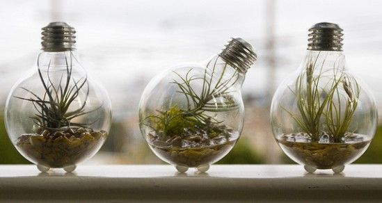 these creative hands have recycled and repurposed everyday light bulbs, allowing the little glass globes to be reborn as functional and beautiful flower pots and mini-terrariums