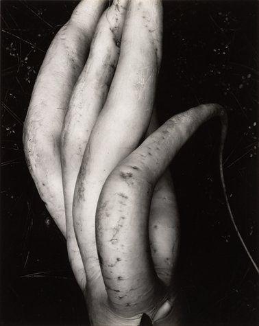 Edward Weston, (my all time favorite photographer) White Radish.