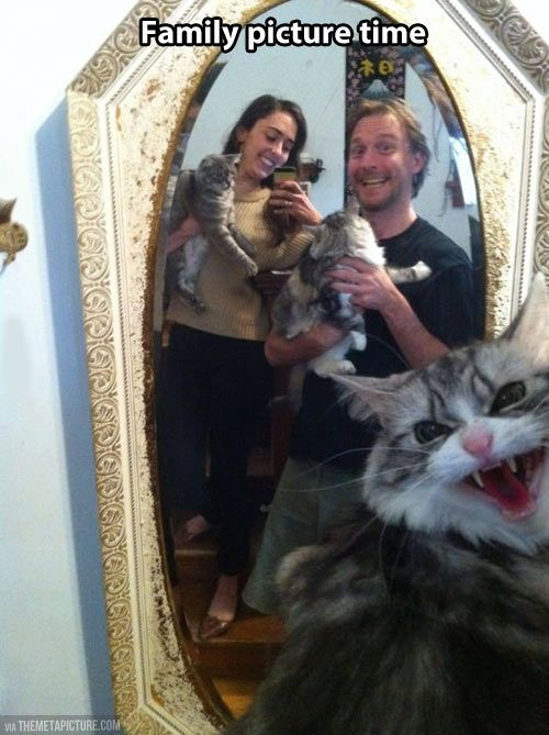 #cats #funny