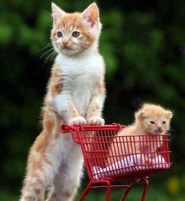 """""""Kitten: """"Mom… Mom… Mom… Mom… Mom…""""  Mom: """"Yes Blondie""""  Kitten: """"I wanna kibble… I wanna sardines… I wanna… I wanna…""""  Mom: """"We'll see"""""""