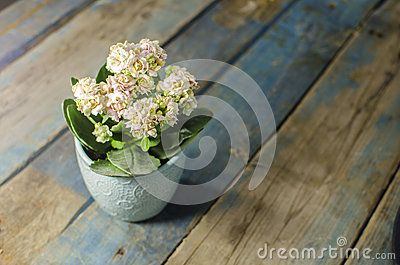 Small Flower on old table