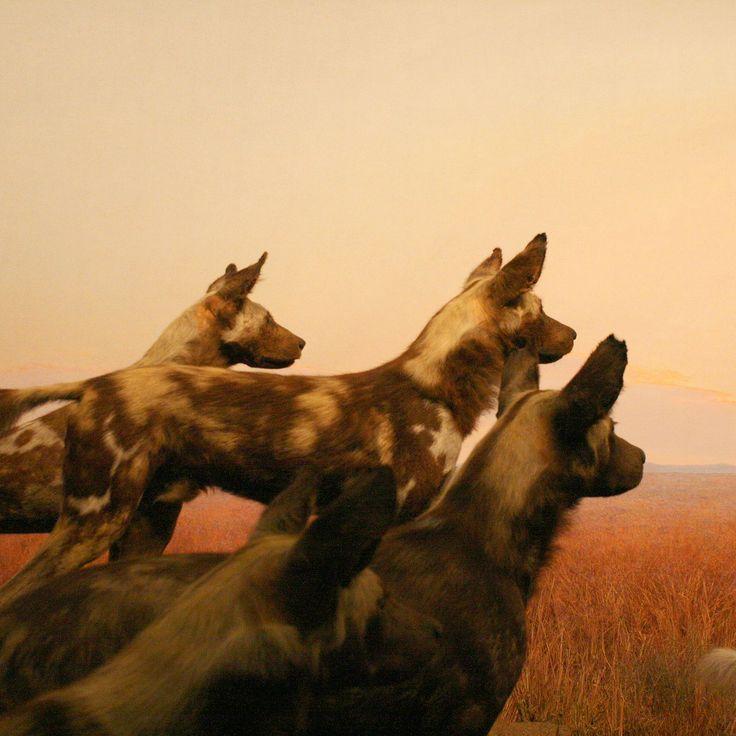 USA-New York (2008) - Serie: Dioramen im American Museum of Natural History