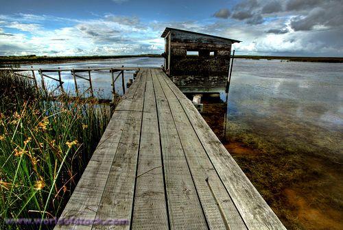 Scenic View Of Saskatchewan Marshes
