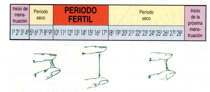 Si aún no te sientes preparadapara ser madre,es importante que sepas de estos métodos anticonceptivos naturales. LEER MÁS: El agua de piña sera tu aliada ¡Mira sus beneficios! Son muy sencillos, consisten en simplemente en identificarel día de ovulación para saber cuándo no se deben …