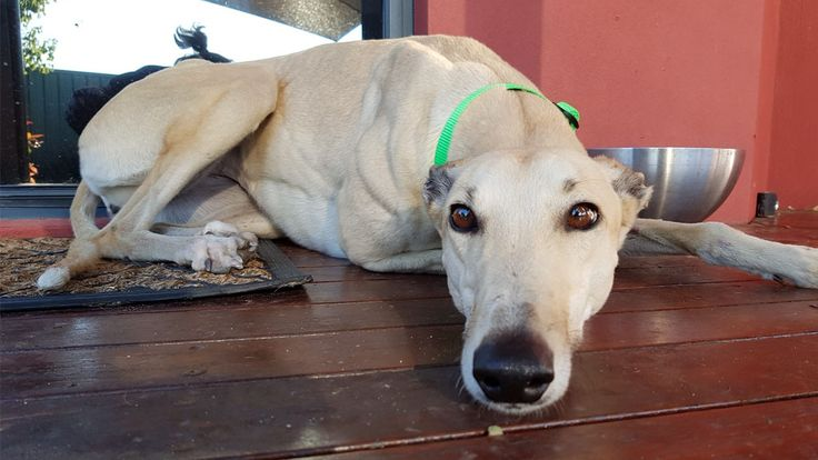 Over 300 dogs were saved from euthanasia last year. (Supplied)