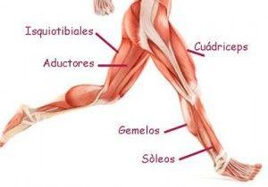 Muchos atletas y también las personas inactivas, se quejan de dolor en la rodilla. Los síntomas y el grado de dolor de rodilla pueden variar, pero es sin duda preocupante para todos. La buena noticia es que es algo muy común, pero no por eso inevitable. Los cuadriceps pueden ayudarnos a prevenir esas lesiones y dolores de rodilla.  http://www.mandamientosdelcuerpoideal.com/los-cuadriceps.html