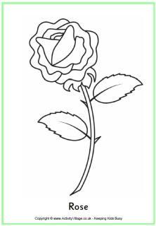Kern 1: roos