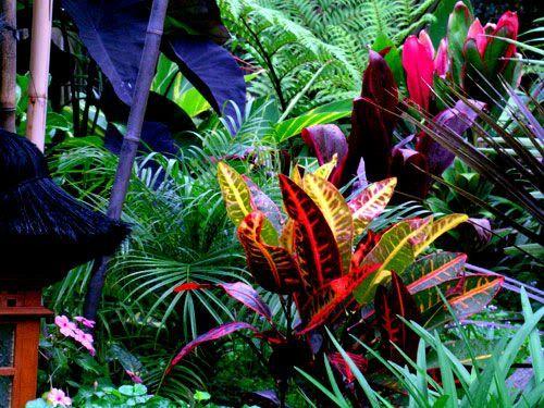 Balinese garden design style (Brisbane & Queensland Gardening)