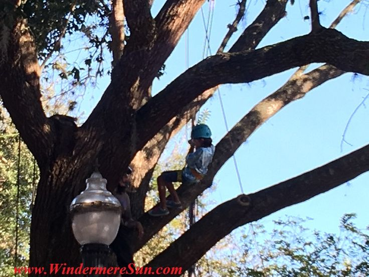 12th Annual Windermere Treebute-Florida Arbor Day Celebration