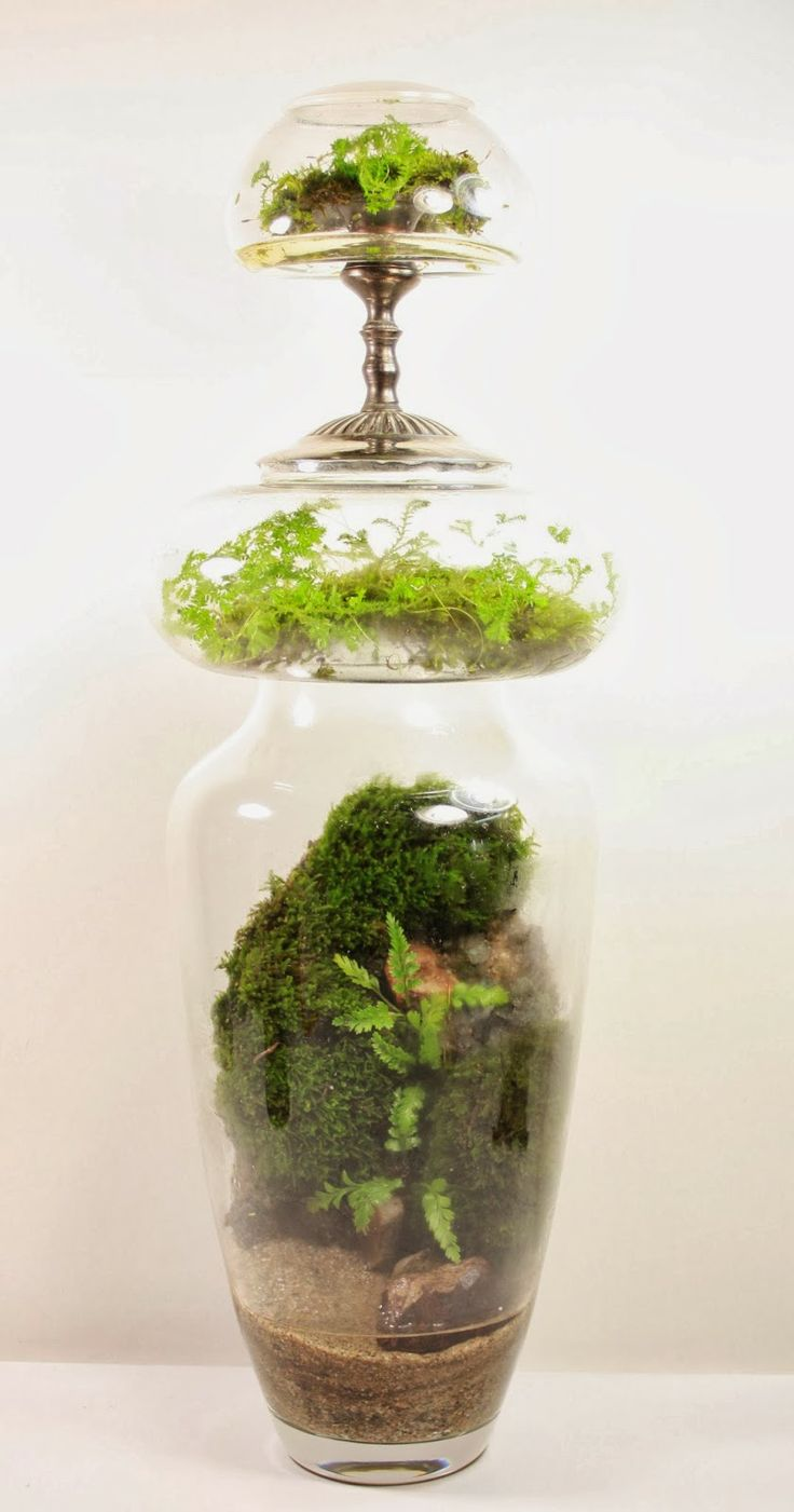 332 best garden - terrariums images on pinterest | garden
