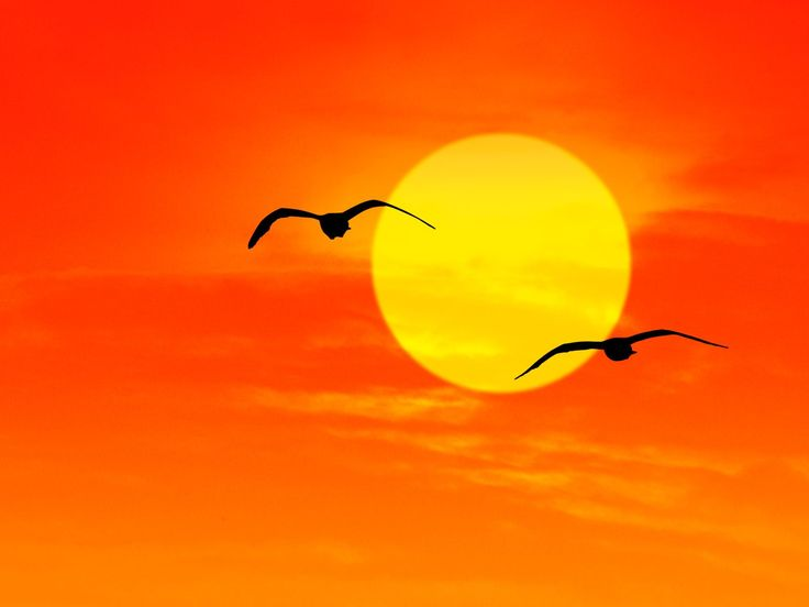 sunrise pictures | Seagulls at Sunrise Florida - HD Background