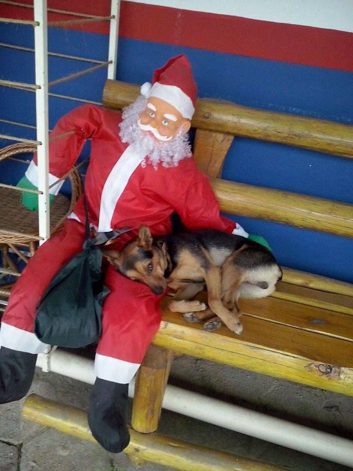 Όλοι έχουν ανάγκη λίγη αγάπη - Η γλυκόπικρη χριστουγεννιάτικη φωτογραφία με τον αδέσποτο σκύλο