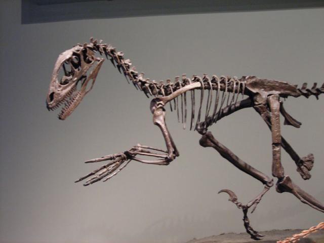 The Dinosaurs of North America: Deinonychus