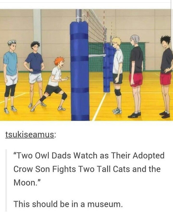 Haikyuu owl team & cat team