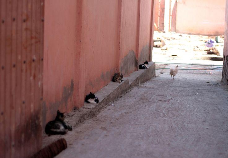 """Quatre chats parfaitement alignés qui somnolent à l'ombre d'un mur. Une poule qui fuit... discrètement, patte à l'air ! Ce moment drôle a été """"capturé""""…"""