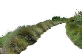 Image result for png grass