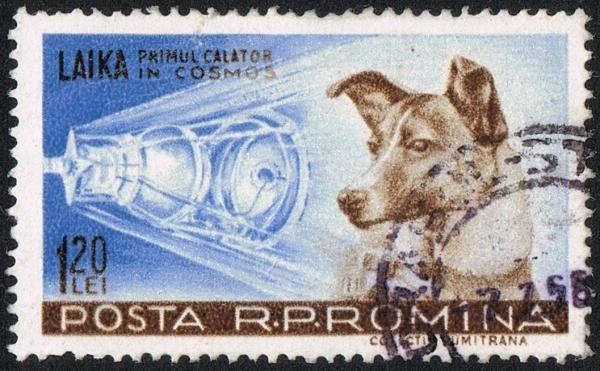 """¿Conoces a #Laika? Es mundialmente conocida como """"la perra del espacio"""" y es que Laika fue el primer ser vivo que viajó al espacio. #ExpertoAnimal #MundoAnimal #ReinoAnimal #Animales #Naturaleza #AnimalesFamosos #Personajes #Caricaturas #Mascotas #Laika #laperradelespacio"""