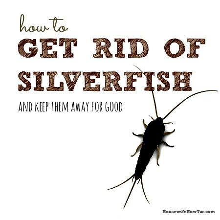 How to get rid of silverfish and keep them away shorts for How to get rid of silver fish