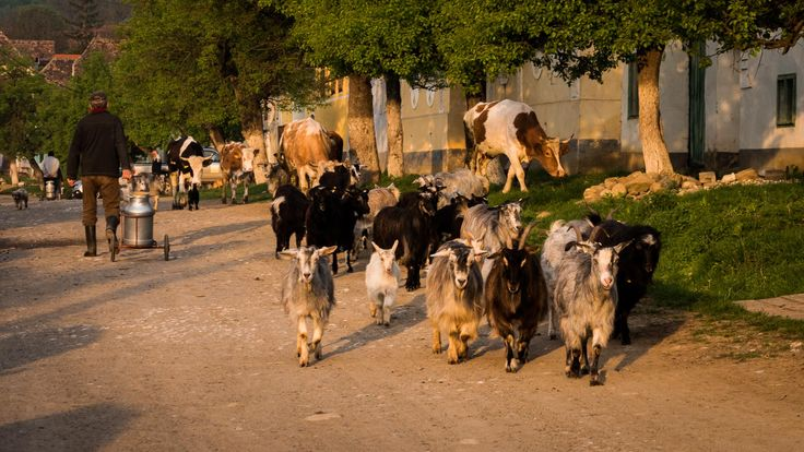Get a real taste of Romania by exploring nature and quaint countryside with your family!