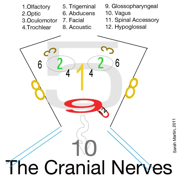 Cranial Nerves  PEOPLE WITH TMJ GET AWFUL HEADACHES AND MIGRAINES FROM THEIR BRUXISM AND GRINDING THEIR TEETH.   GOOD TO HAVE DENTIST MAKE YOU A PERSONAL FITTED MOUTH GUARD FOR SLEEPING...   THE 5TH CRANIAL NERVE CAUSES EXTREME HEAD PAIN WITH TMJ...