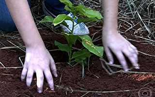 Plantação de árvores se torna solução para mitigar efeito estufa - Jornal da Globo - Catálogo de Vídeos http://g1.globo.com/jornal-da-globo/videos/t/sustentavel/v/plantacao-de-arvores-se-torna-solucao-para-mitigar-efeito-estufa/2551956/