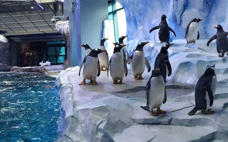 Penguins at Detroit Zoo #VisitDetroit #DetroitComebackCity #WhyHB