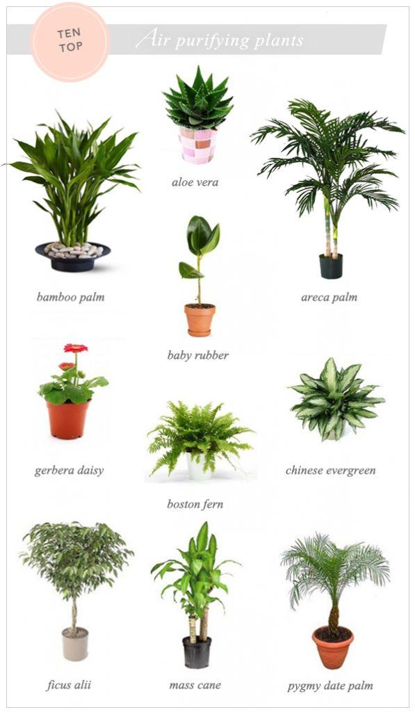 #excll #дизайнинтерьера #решения интерьерные растения