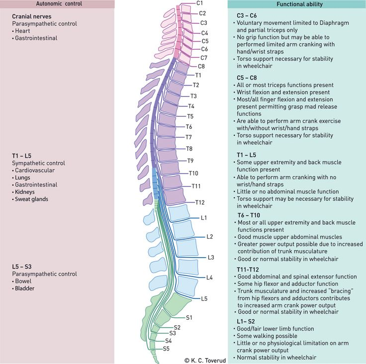 The different levels of spinal cord injuries was one of the most difficult topics in school. This chart doesn't go into great depth, but it's a good start.
