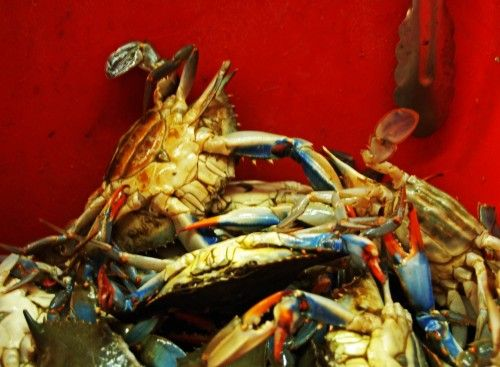 The Crabs in the Bucket/Basket Syndrome - Crab Mentality - Ashtar Command - Spiritual Community Network