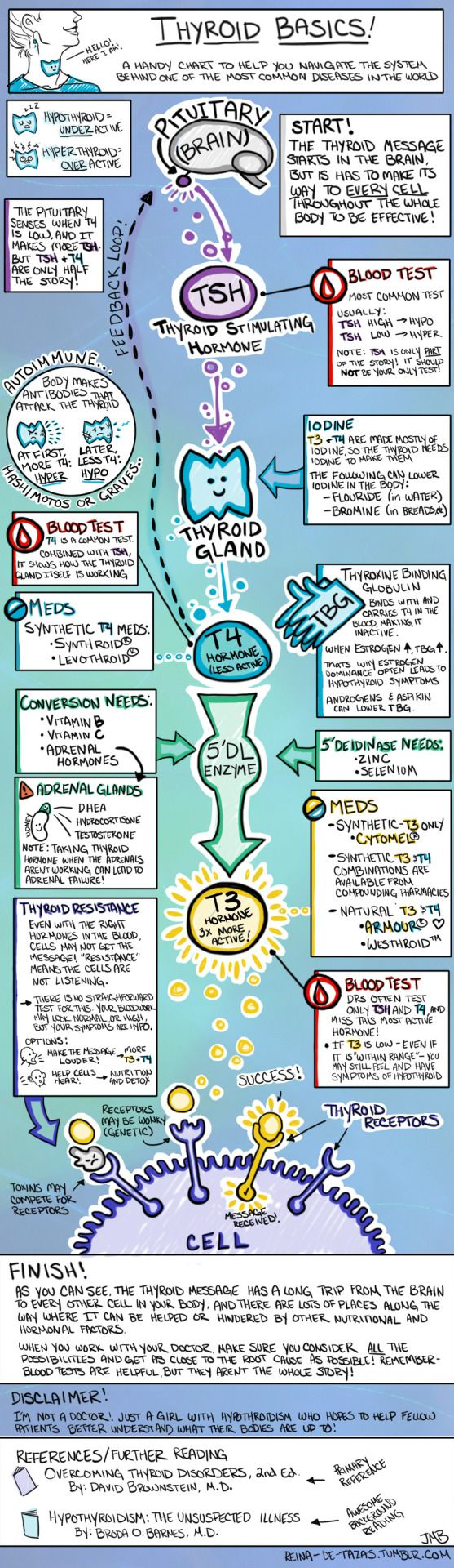 reina-de-tazas: Finally done! Based off a chart that I created for my own reference a while ago; I've shared this with a number of folks who found it helpful, so I decided to turn it into a kind of infographic. The more I read about the thyroid, the more amazed I am at how critically it is tied to our overall quality of life, and almost every aspect of our health. I've experienced this personally - aside from the standard low energy/cold hands/hairloss elements of hypothyroid, I also found…