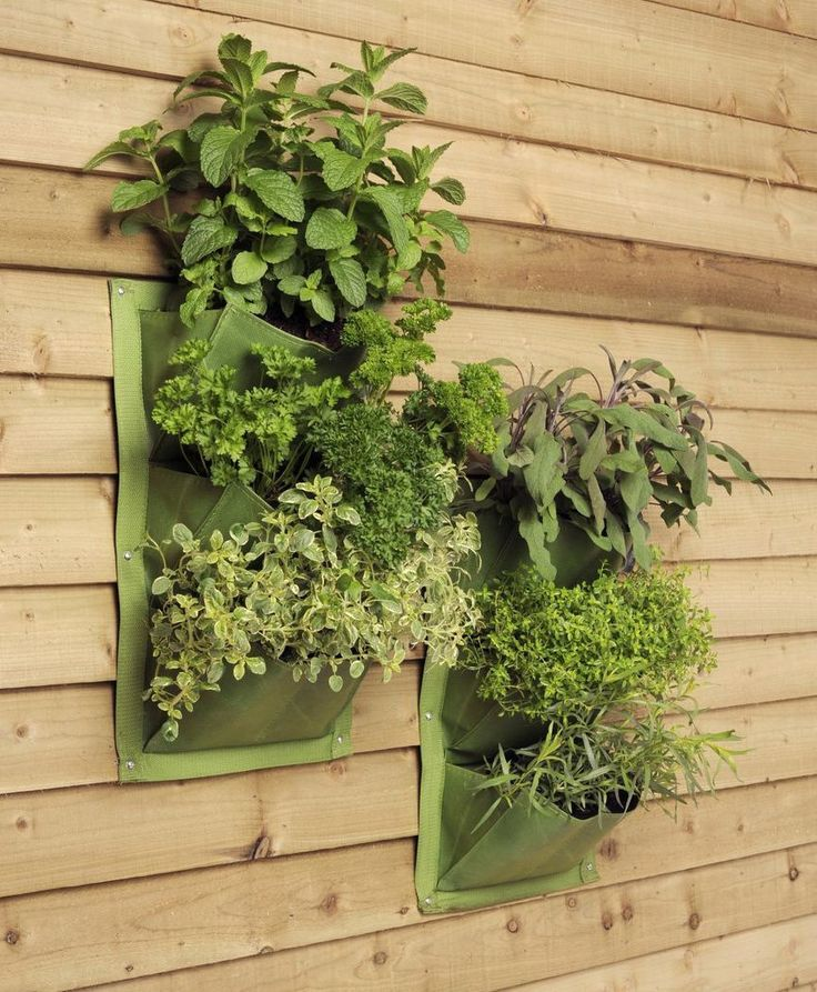 Two vertical planters – put your garden wall space to good use producing a living wall of salad leaves and herbs.