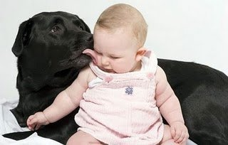 yüz temizliği..-Naturel: Kiss, Amazing Dogs, Things Labrador, Google Search, Baby Photography, So Sweet, Black Labs, Animal, Baby Stuff