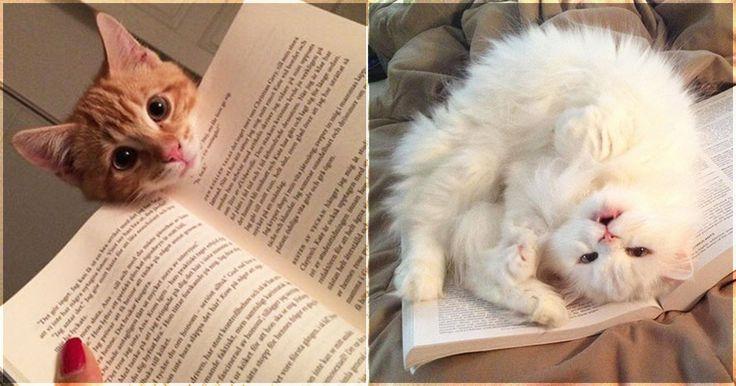 20 chats qui ont besoin de votre attention du moment que vous ouvrez un livre http://www.ipnoze.com/2015/03/22/20-chats-qui-ont-besoin-de-votre-attention-du-moment-que-vous-ouvrez-un-livre/