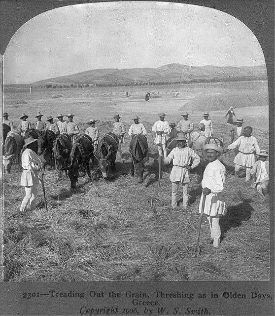 Treading out the grain,Threshing as in olden days,Greece,Donkeys,Men,c1906