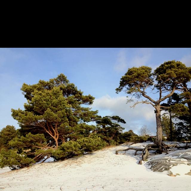 Mitt paradis på jorden - Trouville, Sandhamn