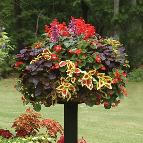 Attractive This Basket (planted With Salvia, Coleus, And Begonias) Looks Like A Giant