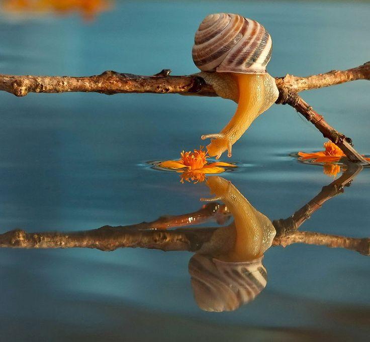 """O fotógrafo ucraniano Vyacheslav Mishchenko têm documentado nos últimos anos a vida cotidiana dos caracóis em seus """"mundos delicados"""" utilizando a fotografia macro."""