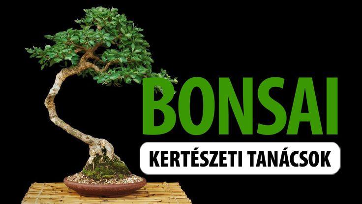 """Bonsai - """"tálban nevelt növény"""" - fajtái, tartása"""