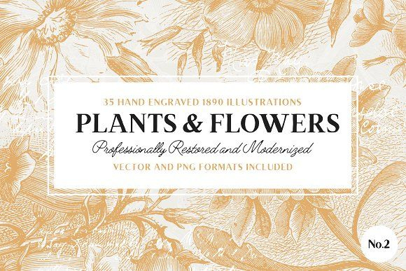 35 Plant & Flower Illustrations No.2 by Vector Hut on @creativemarket