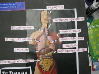 internal body Te Reo