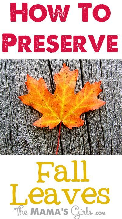 Preserve Your Favorite Fall Leaves 1/2 cup water   1/4 cup vegetable gylcerin ziploc bag Marinate in solution for 3 - 4 days.  Remove and blot dry.  I must try this!