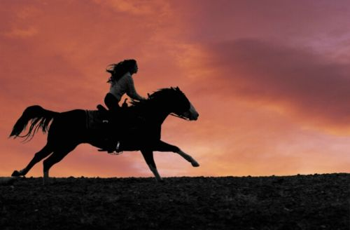 Being on the back of the horse you feel so care free..there a no worries while on the back of a horse :)