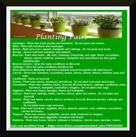 Planting pairs for Spring Planting on purelyhomespun.com