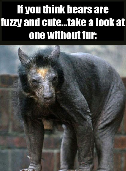 Bear without fur: scariest fraking thing on the planet. # ...