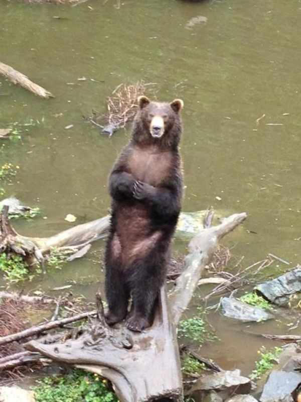 Fortress of the bears, Sitka, Alaska.    A MUST SEE!!!