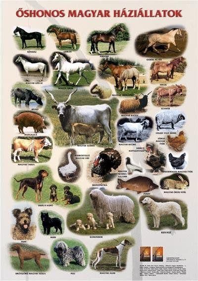 őshonos+magyar+állatok.jpg (400×567)