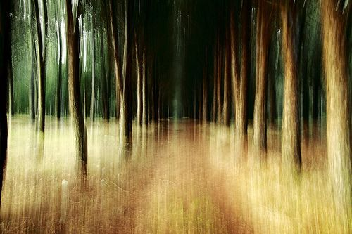 Outstanding Intentional Camera Movement Images - Digital Photo Secrets