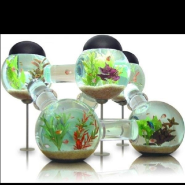 Top 40 Ideas About Cool Fish Tanks On Pinterest Aqua