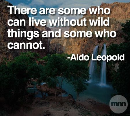 """There are some who can live without wild things and some who cannot."" (Aldo Leopold) ... I am one of those. (AK)"